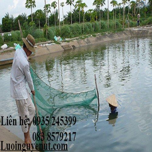 Lưới vét cá chuyên nghiệp Nguyễn Út5