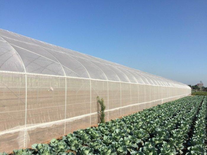Nhà lưới, lưới chắn côn trùng politiv, lưới chắn côn trùng thái lan, lưới nhập khẩu giá rẻ tại Hà Nội1