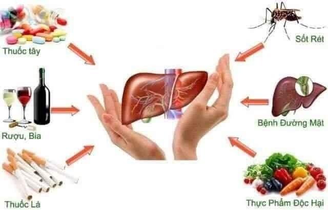 Detoxmune giúp cải thiện chức năng gan, đào thải độc tố giúp tăng cường sức khỏe0