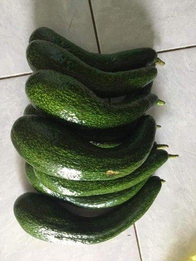 Bơ 034 Lâm Đồng - Vựa bơ sỉ Vườn Nhà Dậu đóng thùng từ 30kg12