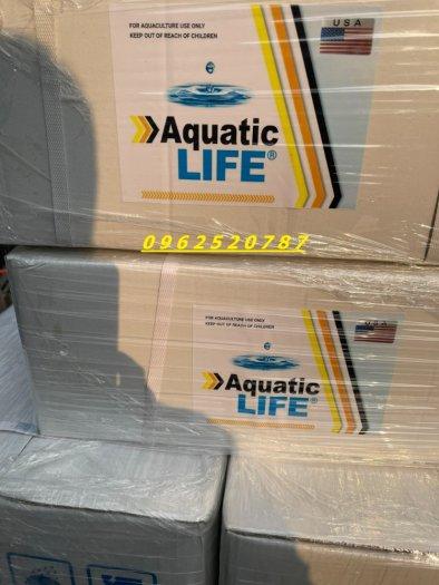 Aquatic Lite1