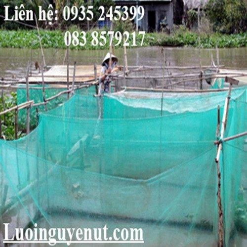 Lưới mùng nuôi ếch Nguyễn Út4