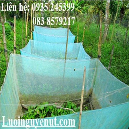 Lưới mùng nuôi ếch Nguyễn Út3