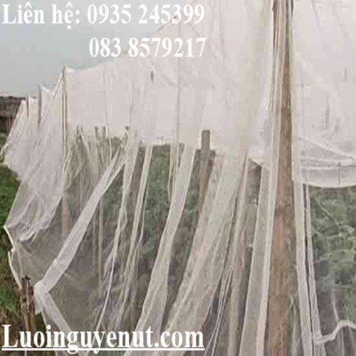 Lưới mùng nuôi ếch Nguyễn Út2