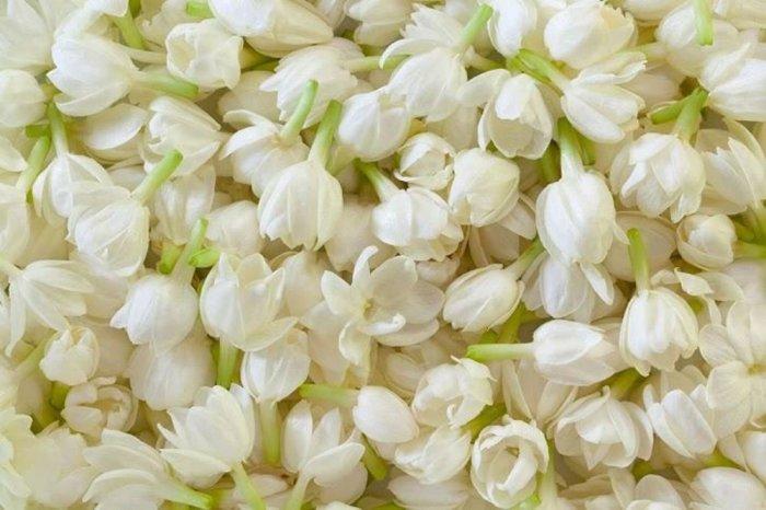 Hoa lài tươi ( fresh jasmine flower )2