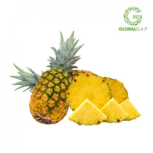 Chuyên cung cấp giống cây dứa MD2, cây dứa mật, dứa MD2 nuôi cấy mô, số lượng lớn, giao hàng toàn quốc24