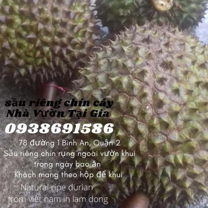 Địa chỉ mua sầu riêng chín cây TPHCM SDt: 093 869 1586 ( Bùi Tình bán nhé )1