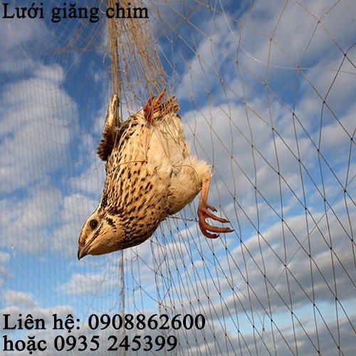 Lưới tàng hình đã làm sẵn giăng bẫy chim0