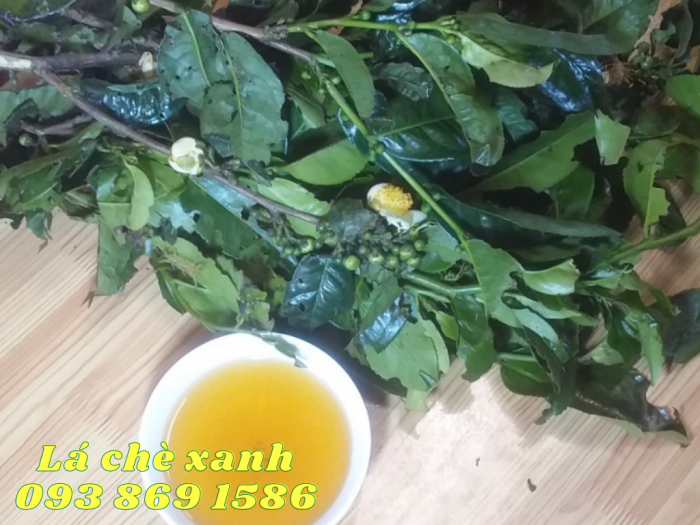 Mua Lá Chè Xanh Lâm Đồng Gọi 093 869 1586 2