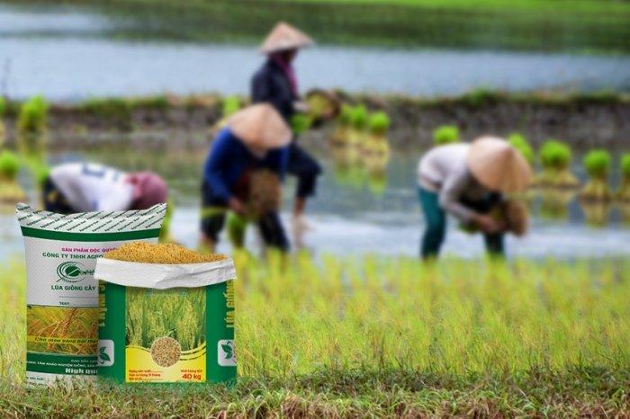 Bao Bì Lúa Giống Bền Đẹp – Thiết Kế Ấn Tượng – Giá Tốt0