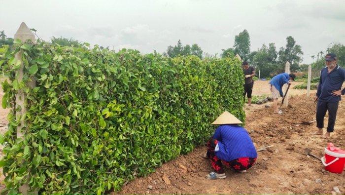 Tường Rào  Xanh Cảnh Quan11