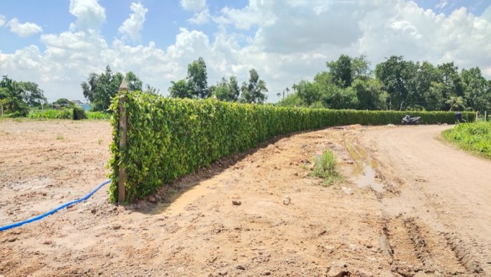Tường Rào  Xanh Cảnh Quan4
