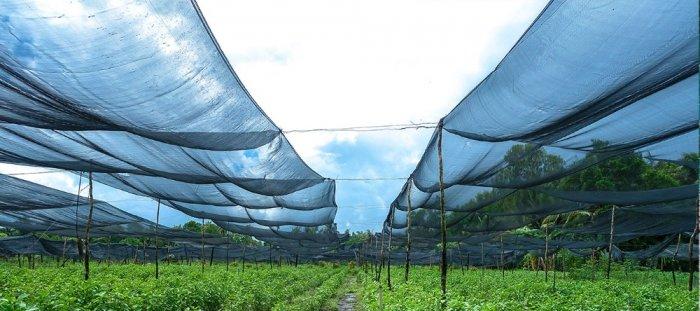 Lưới công trình, che nắng, che côn trùng...màu đen, nguyên cuộn 2m x 25m.2
