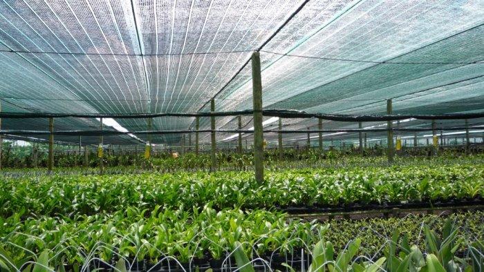 Lưới che công công trình, che chắn công trình, vườn ươm... nguyên cuộn 2m x 25m ( màu xanh)1