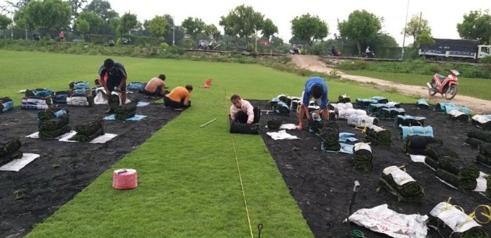 Cỏ Kiểng cỏ sân vườn6