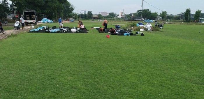 Cỏ Kiểng cỏ sân vườn5