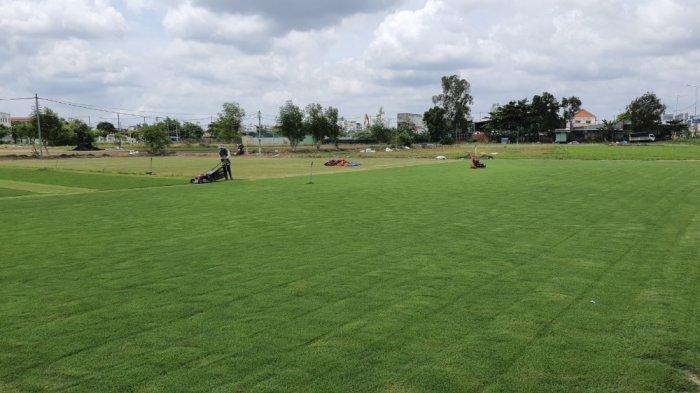 Cỏ Kiểng cỏ sân vườn4