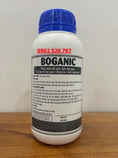 Cao thảo dược bố gan Boganic1