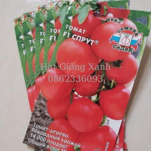 Cung cấp hạt giống cà chua leo giàn Nga, cà chua bạch tuộc, hàng f11