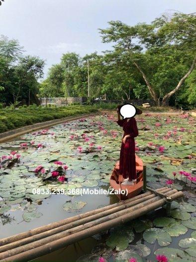 Thuyền gỗ chụp ảnh hồ sen, đi sông1