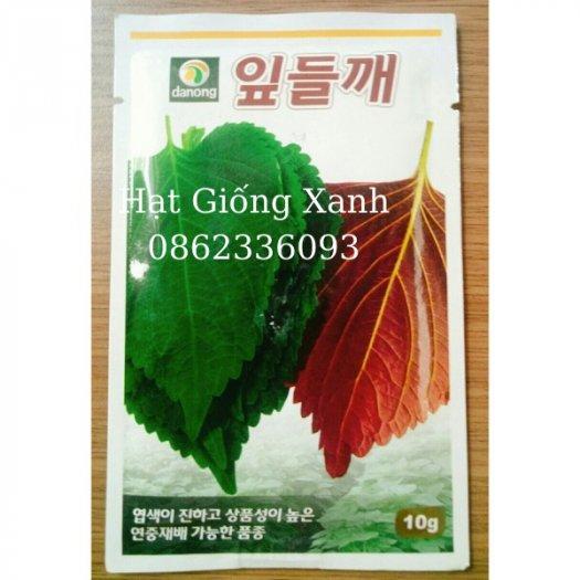Hạt giống lá mè Hàn Quốc, hạt giống nhập khẩu F14