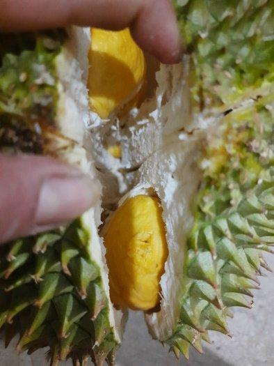 Sầu riêng thái cơm vàng hạt lép tây Nguyên4