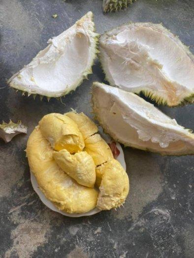Sầu riêng thái cơm vàng hạt lép tây Nguyên0