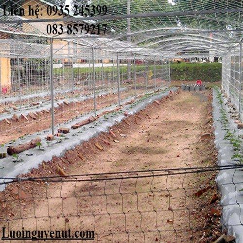 Lưới Trồng Cây Dây Leo Sân Vườn2
