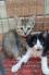 Cần bán mấy em Chó mèo xinh
