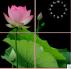 Tranh đồng hồ treo tường Hoa Sen nghệ thuật AmiA TDH 130
