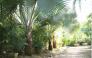 Vườn kiểng Ba Hùng cung cấp các loại cây công trình, cây giống, hạt giống