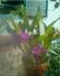 Bán chậu hoa lan nhỏ đẹp trang trí đẹp