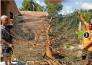 Bán cây Mai vàng để 63 hoành, cây bon sai đẹp trưng bày sang trọng cho ngày Tết
