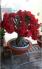 Hoa sứ thái nhỏ gọn chưng Tết rất đẹp và sang trọng