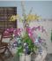 Chậu hoa đẹp nhiều màu sắc giá rẻ