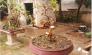 Cây Ổi cảnh bonsai nhỏ gọn