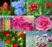 Từ vựng tiếng anh về các loài hoa