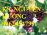 Chuyên cung cấp giống cây nho pháp, nho mỹ, nho đỏ, nho đen, nho xanh