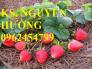 Chuyên cung cấp giống cây dâu tây chất lượng cao
