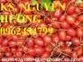 Chuyên cung cấp giống cây nhót ngọt