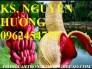 Chuyên cung cấp giống cây chuối đỏ đắc ca chuẩn giống chất lượng cao