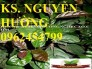 Chuyên cung cấp giống cây xạ đen và sản phẩm xạ đen chất lượng cao