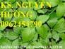 Chuyên cung cấp cây giống giảo cổ lam và sản phẩm giảo cổ lam chất lượng cao