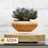 Chậu cây bay air bonsai
