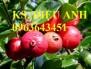 Bán các loại cây giống độc lạ: ổi tím Malaysia, chuối đỏ Đacca,xoài tím,sầu riêng
