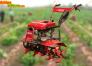 Máy làm đất đa năng, máy xới đất trồng rau giá rẻ
