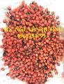 Cung cấp hạt giống sâm ngọc linh, cam kết chuẩn giống, giao hàng toàn quốc