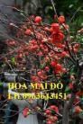 Sỉ, lẻ cây mai đỏ, cây hoa mai đỏ bán tết, cây hoa mai đỏ bonsai, uy tín, giao toàn quốc