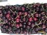 Cherry New Zealand size 26-28mm
