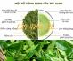 Gốc trà xanh cổ thụ Có tuổi đời từ 20 năm trở lên